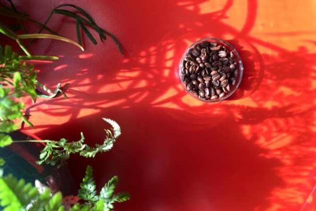 11月8日はコーヒー豆増量デー!