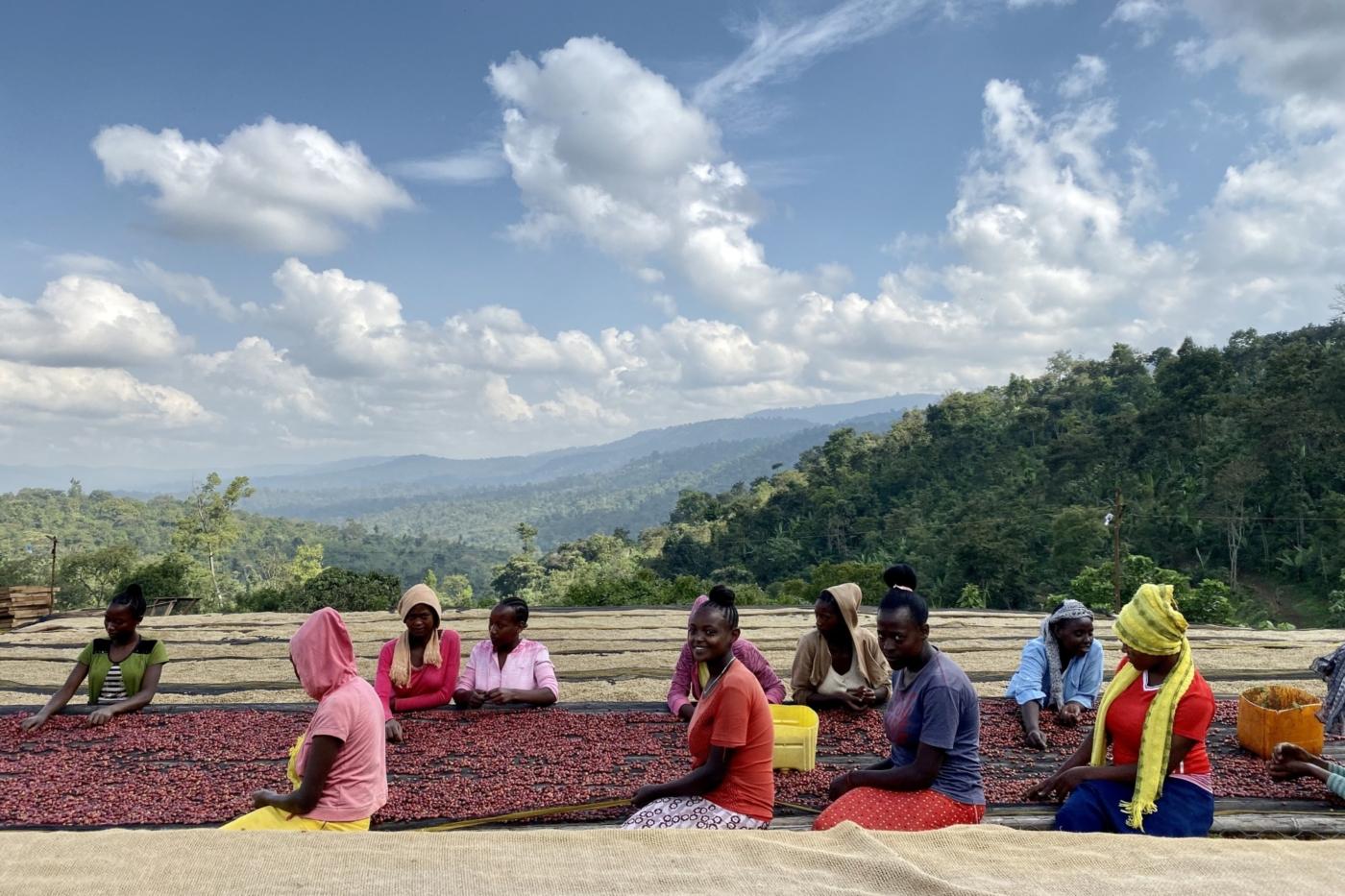 ハンベラ・ワメナ – 水洗式 / エチオピア